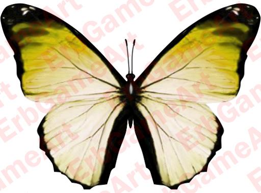 Butterfly6d