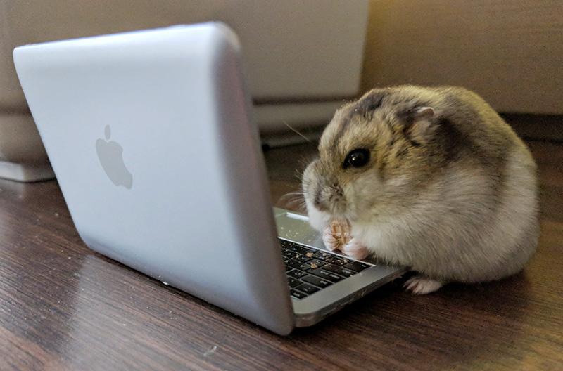 hamster_shr1mpsy